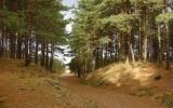 Piękne lasy